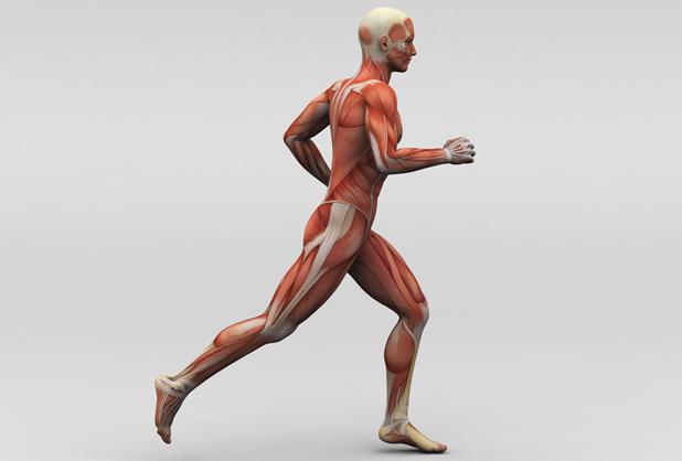 Alimentos que ayudan a fortalecer tus músculos | Alto Nivel